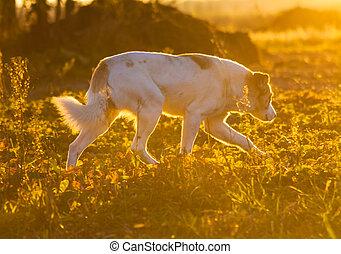 Running dog. Close up portrait