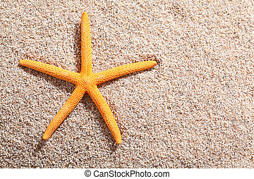 Starfish lying on golden beach sand in the summer sun with...