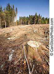 Clearcut Block - A forest with the trees cut down