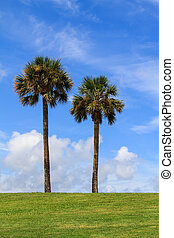 Two palm trees in St. Augustine, Florida, USA