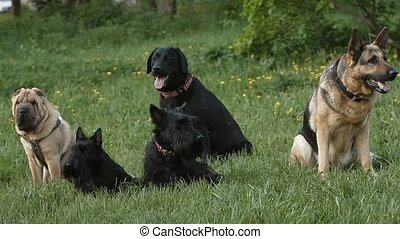dogs - group of dogs in the park