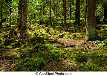 The primeval forest-HDR - The primeval forest with mossed...