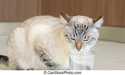 Thai cat is drinking clean water.