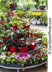 plantas, venta, Guardería infantil