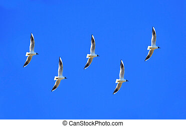 A flock of birds - A flock of birds from the seagulls fly in...