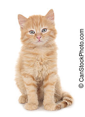 Little red tabby kitten isolated on white