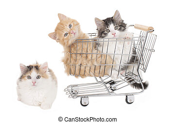 Three little kitten in a shopping baket isolated on white