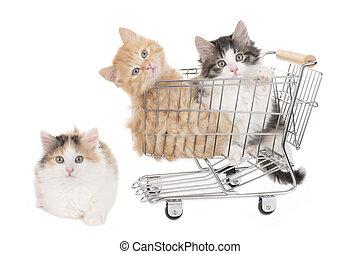 poco, compras,  baket, tres, aislado, gatito, blanco