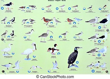 Seabirds - Plate with seabirds on The Belgian coast.