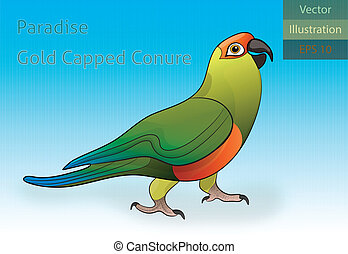 Paradise Gold Capped Conure Vector - EPS 10 - Vector...
