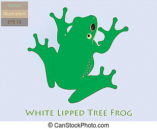 White Lipped Tree Frog - EPS 10 - Vector Illustration of a...