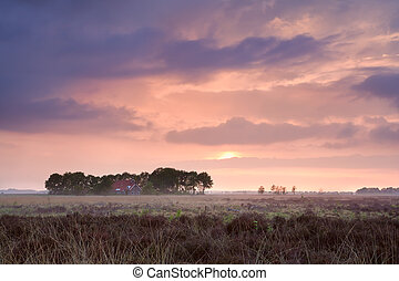 calm pink sunset over home among swamps, Drenthe,...