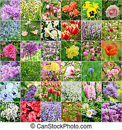 Flower collection - Collage from many images of different...