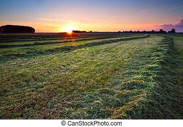 sunrise over green haymaking - sun star at sunrise over...