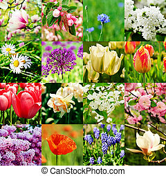 Flower collage - collage from different kind of spring...