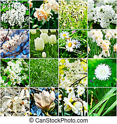 White flower collage - collage from different kind of white...