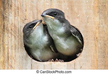 bebê, Pássaros, em, pássaro, casa