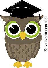 sabio, búho, graduación, aislado