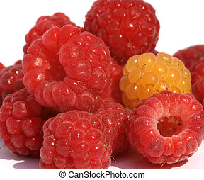 Yellow and red rasberrys - Color photo of pile of red and...