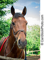 Horse in the shelter