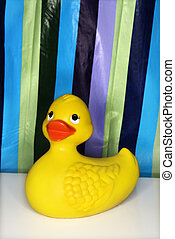 Rubber ducky. - Still life shot of a rubber ducky with a...