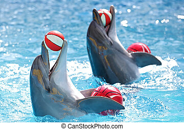 dolphins with balls - dolphins playing with a ball in the...
