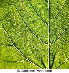 Grape leaf closeup