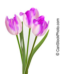 Three beautiful tulips, isolated on white. EPS 8