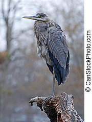 Heron Fishing - Heron perching on a branch.