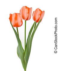 Three beautiful tulips, isolated on white. EPS 8