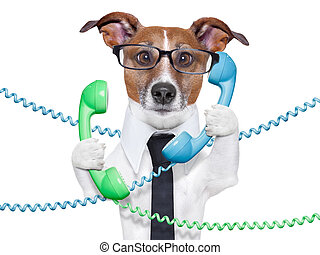 business dog - dog tangled in a telephone and cable chaos