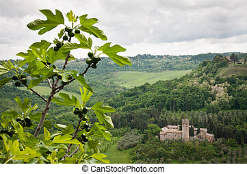 Landscape Orvieto - View from Orvieto at fig tree and castle