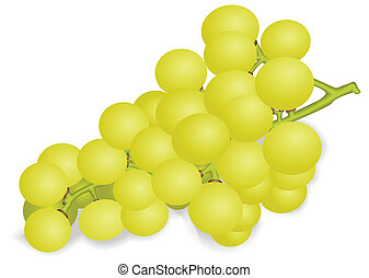 Bunch of white grapes - Illustration of a ripe bunch of...