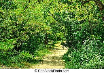 Road in the forest - Rural road in the lush Crimea forest