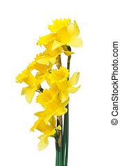 Spring daffodils border or frame background - Daffodils...