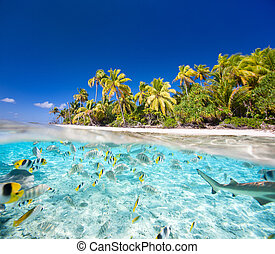 Tropical island - Beautiful tropical island in French...