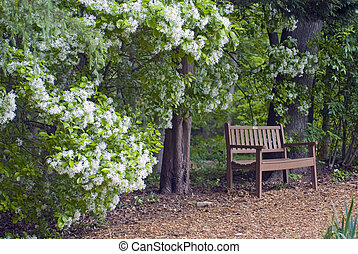 Bench - bench along path with bush in bloom inviting to rest...