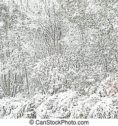 Plants and branches nature covered by snow Winter background...