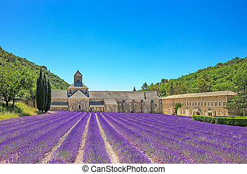 Abbey of Senanque and blooming rows lavender flowers....