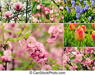 Spring flowers - Collage from six images with spring flowers