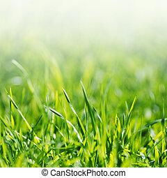 Green grass - Vibrant green spring grass close-up