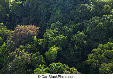 high angle shot of forest - Aerial shot of natural...