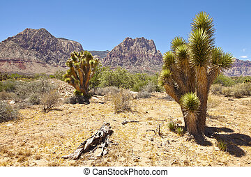 Red Rock Canyon cactus trees Nevada - Red Rock Canyon...