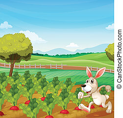 A bunny running in the farm - Illustration of a bunny...