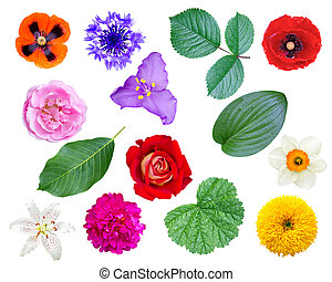 set of flowers and leaves isolated on white background