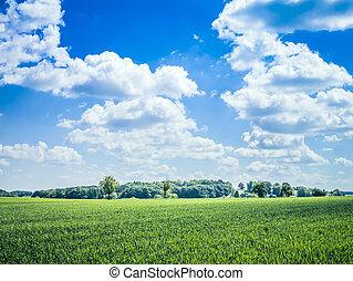 藍色, 天空, 綠色, 草地