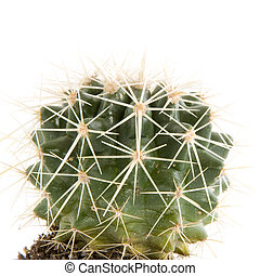prickly cactus - Prickly cactus with sharp needles