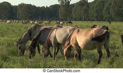 horses grazing synchronously