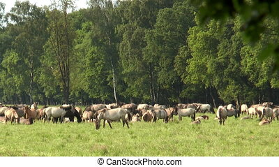 large herd of horses grazing