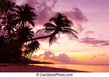 Beautiful tropical sunset with palm trees silhoette at beach